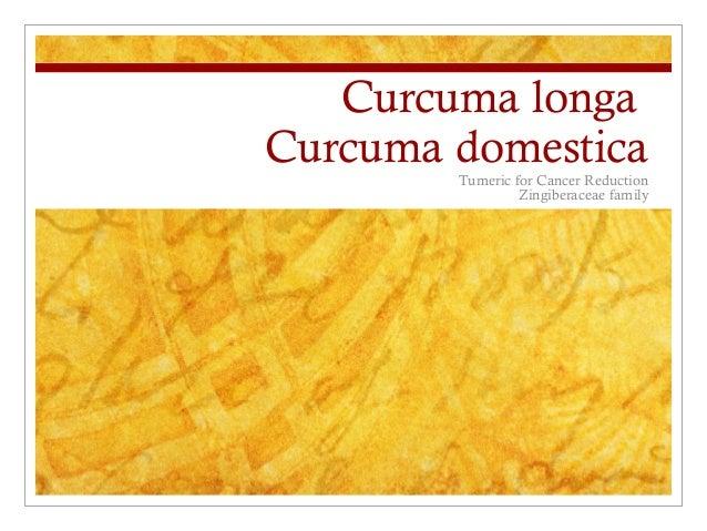 Curcuma longa Curcuma domestica Tumeric for Cancer Reduction Zingiberaceae family