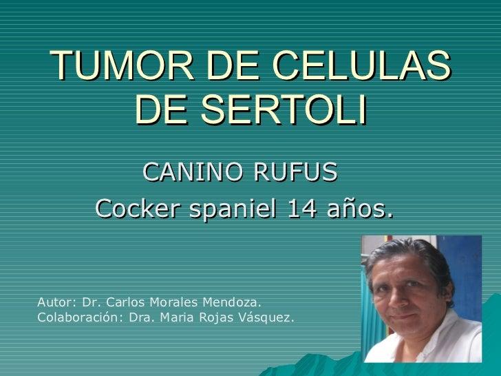 TUMOR DE CELULAS DE SERTOLI CANINO RUFUS  Cocker spaniel 14 años. Autor: Dr. Carlos Morales Mendoza. Colaboración: Dra. Ma...