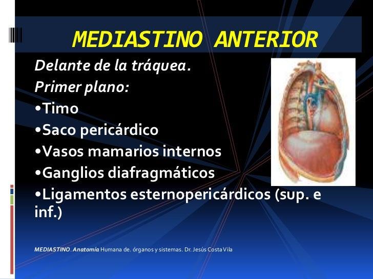 Excelente Nodo Mediastinal Inspiración - Anatomía de Las Imágenesdel ...