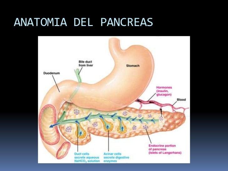 Tumores del pancreas