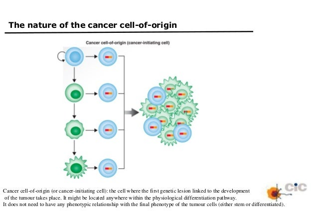 tumor stem cell reprogramming as a driver of cancer as