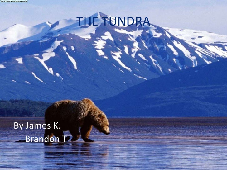 THE TUNDRA<br />By James K.     <br />    Brandon T.<br />