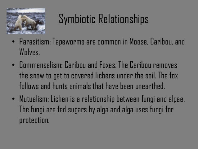 symbiotic relationship in the tundra biome