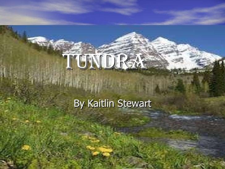 tundra By Kaitlin Stewart