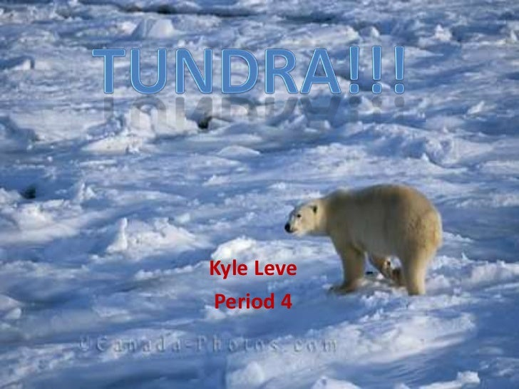 Kyle LevePeriod 4
