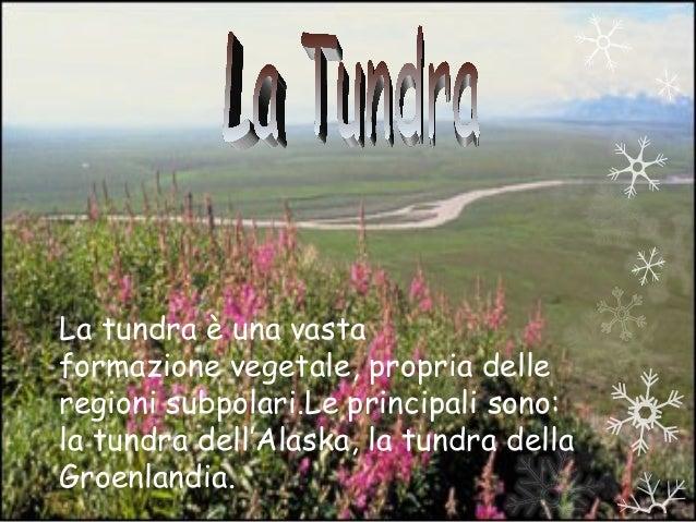 La tundra è una vastaformazione vegetale, propria delleregioni subpolari.Le principali sono:la tundra dell'Alaska, la tund...