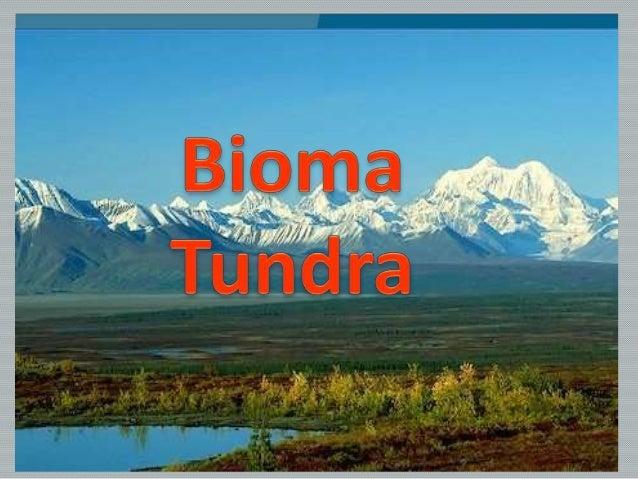 Ocorrência ou localização :  A tundra é uma vegetação típica de regiões de altas latitudes, ou seja, das áreas polares. E...