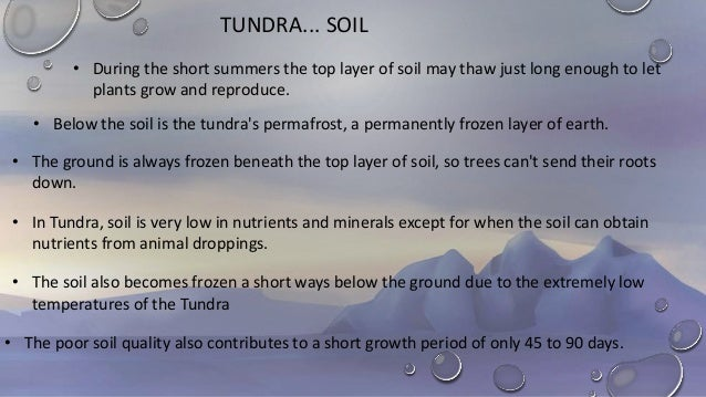 arctic and alpine soils essay Essay location the tundra is located in the northern regions of north america, europe, asia, as well as a few regions of antarctica the tundra is the second largest vegetation zone in canada it can be divided clearly into three different sections: the high arctic tundra, the low arctic tundra and the alpine tundra.