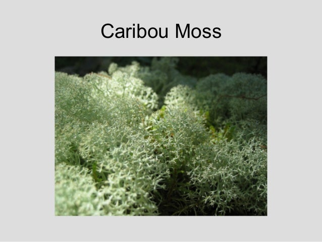 Tundra Flora Amp Fauna