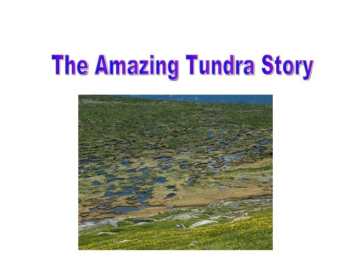 The Amazing Tundra Story