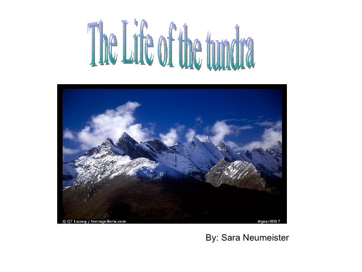 By: Sara Neumeister The Life of the tundra