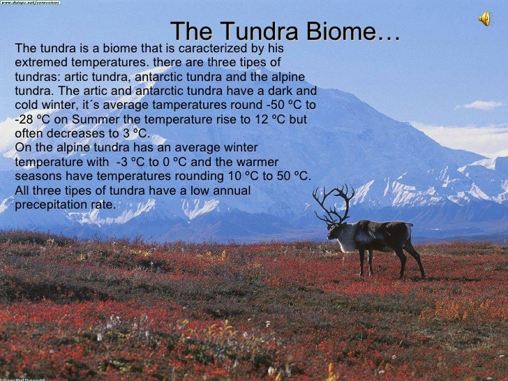 The Tundra Biome… The tundra is a biome that is caracterized by his extremed temperatures. there are three tipes of tundra...