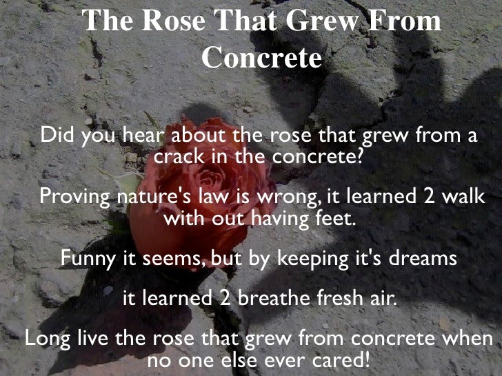 long live the rose that grew from concrete