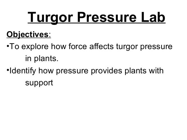 Turgor Pressure Lab Objectives: •To explore how force affects turgor pressure in plants. •Identify how pressure provides p...