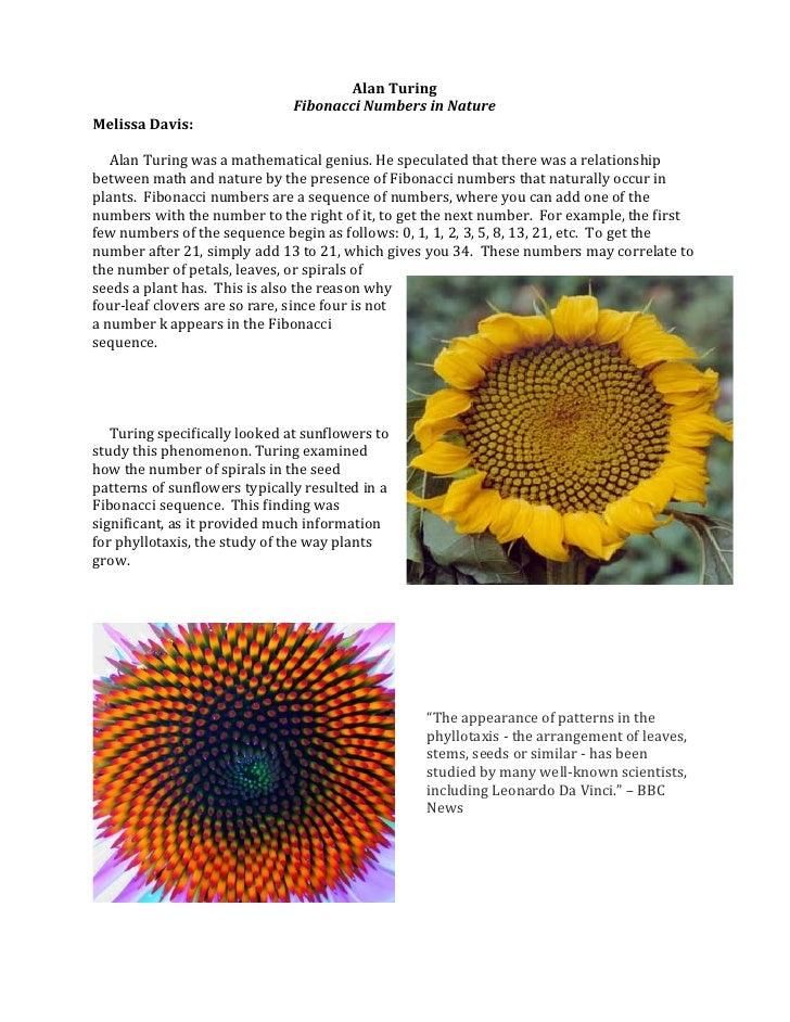 Alan Turing                                                     Fibonacci Numbers in Nature Melissa Davis: ...