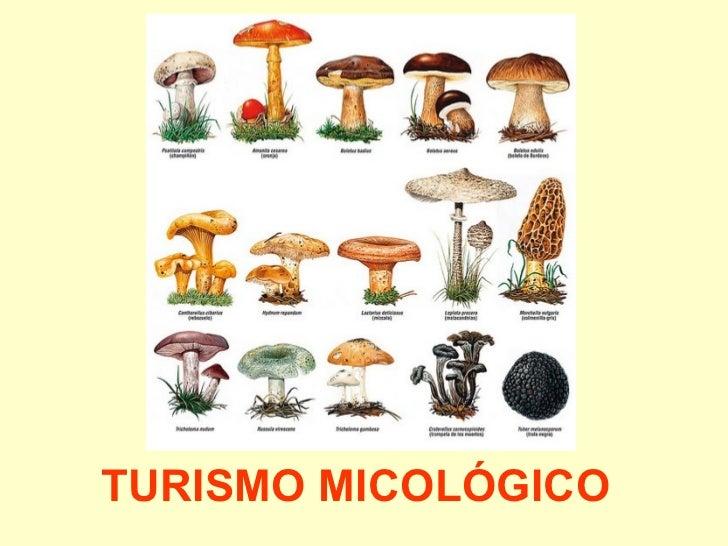 TURISMO MICOLÓGICO