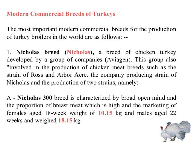 Modern Commercial Breeds of Turkeys The most important modern commercial breeds for the production of turkey broilers in t...