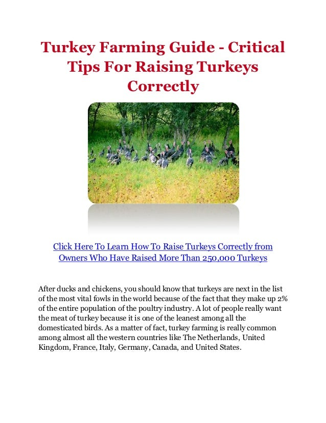 Turkey Farming Guide - Critical   Tips For Raising Turkeys          Correctly    Click Here To Learn How To Raise Turkeys ...