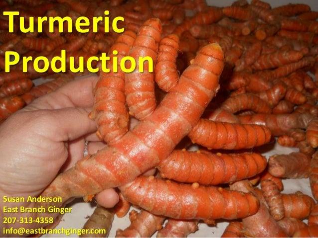 TurmericProductionSusan AndersonEast Branch Ginger207-313-4358info@eastbranchginger.com