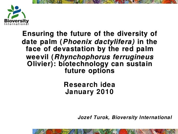Ensuring the future of the diversity of date palm ( Phoenix dactylifera)  in the face of devastation by the red palm weevi...