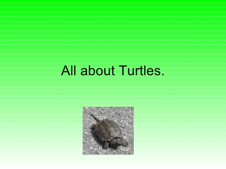 All about Turtles.