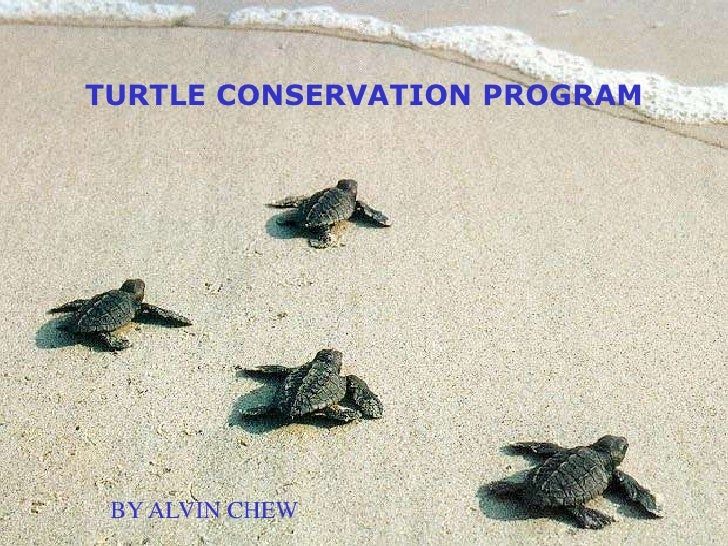 TURTLE CONSERVATION PROGRAM<br />BY ALVIN CHEW<br />
