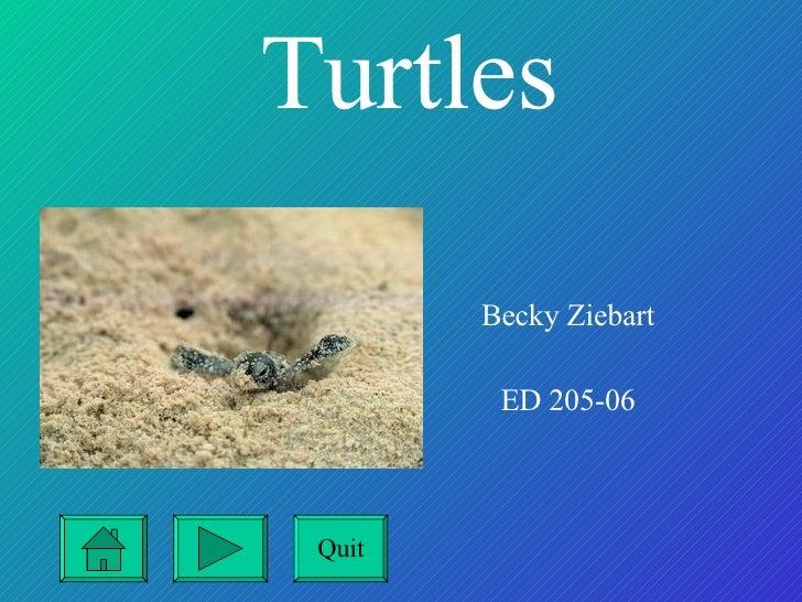 Turtles   Becky Ziebart ED 205-06 Quit