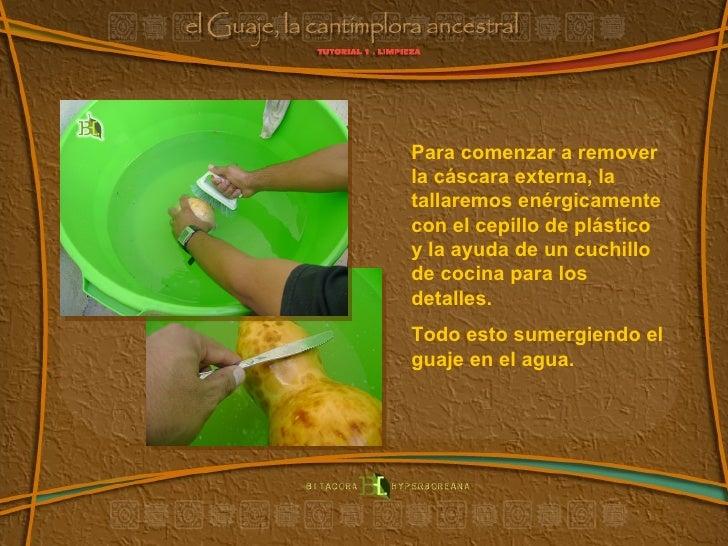Para comenzar a remover la cáscara externa, la  tallaremos enérgicamente con el cepillo de plástico y la ayuda de un cuchi...