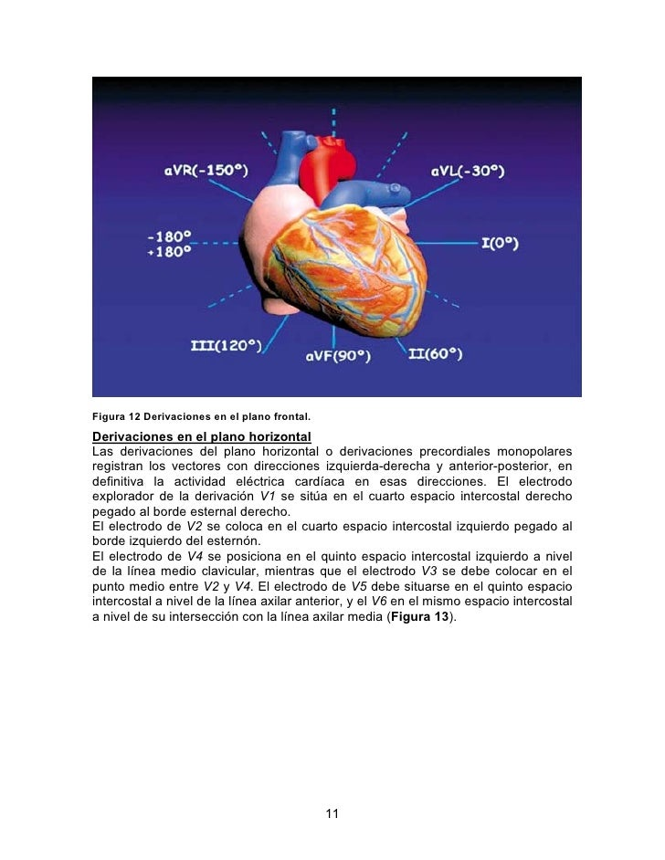 Tutorial electrocardiograma for Cuarto espacio intercostal