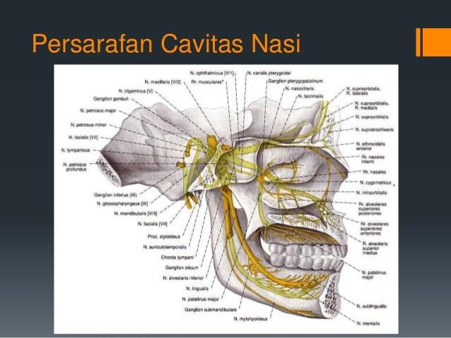 Tutorial skenario c (Pneumothorax)