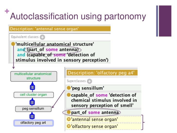 From OBO to OWL and back - building scalable ontologies
