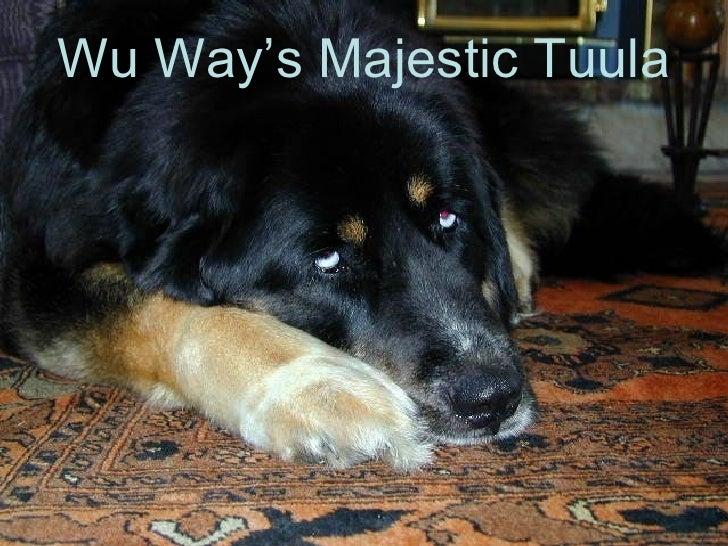 Wu Way's Majestic Tuula