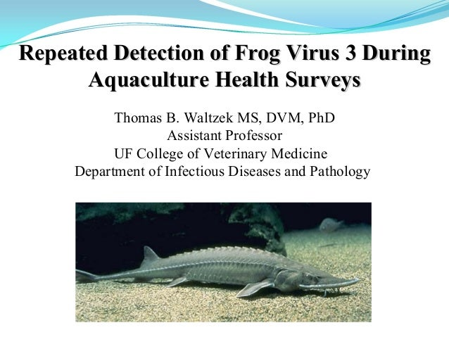 Thomas B. Waltzek MS, DVM, PhD Assistant Professor UF College of Veterinary Medicine Department of Infectious Diseases and...