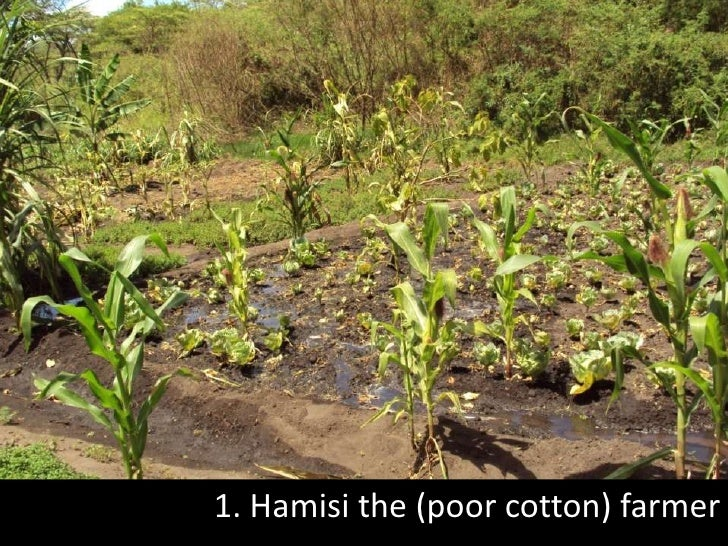1. Hamisi the (poor cotton) farmer<br />