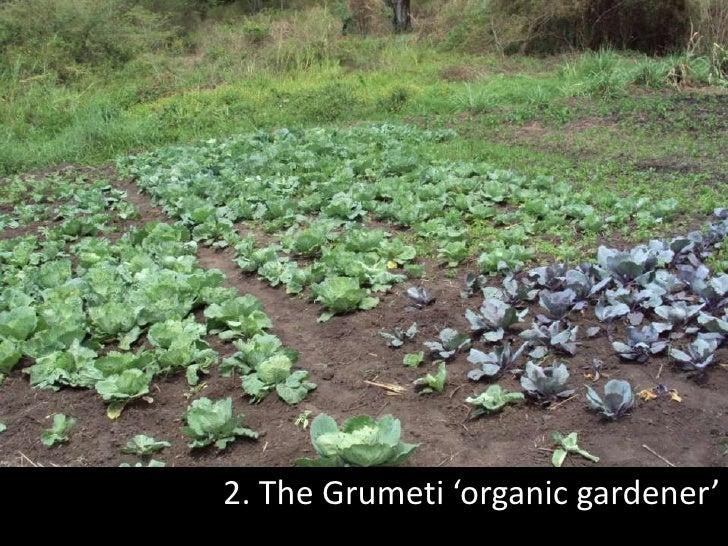 2. The Grumeti 'organic gardener'<br />