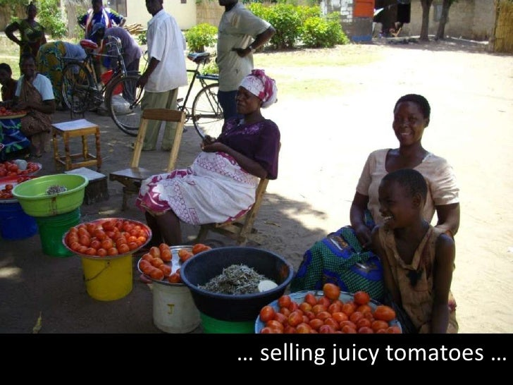 … selling juicy tomatoes …<br />