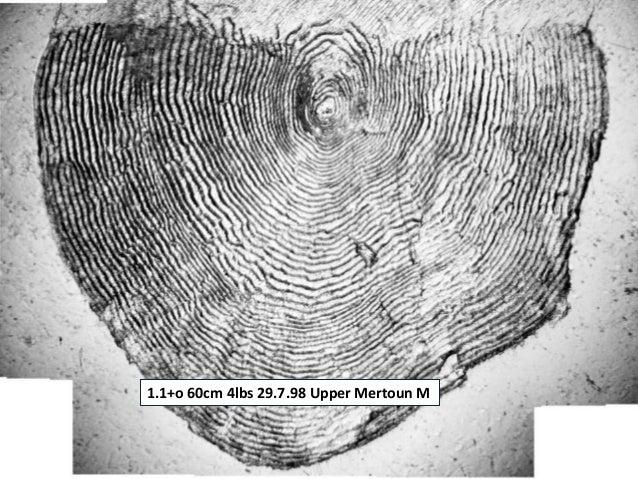 1.1+o 60cm 4lbs 29.7.98 Upper Mertoun M