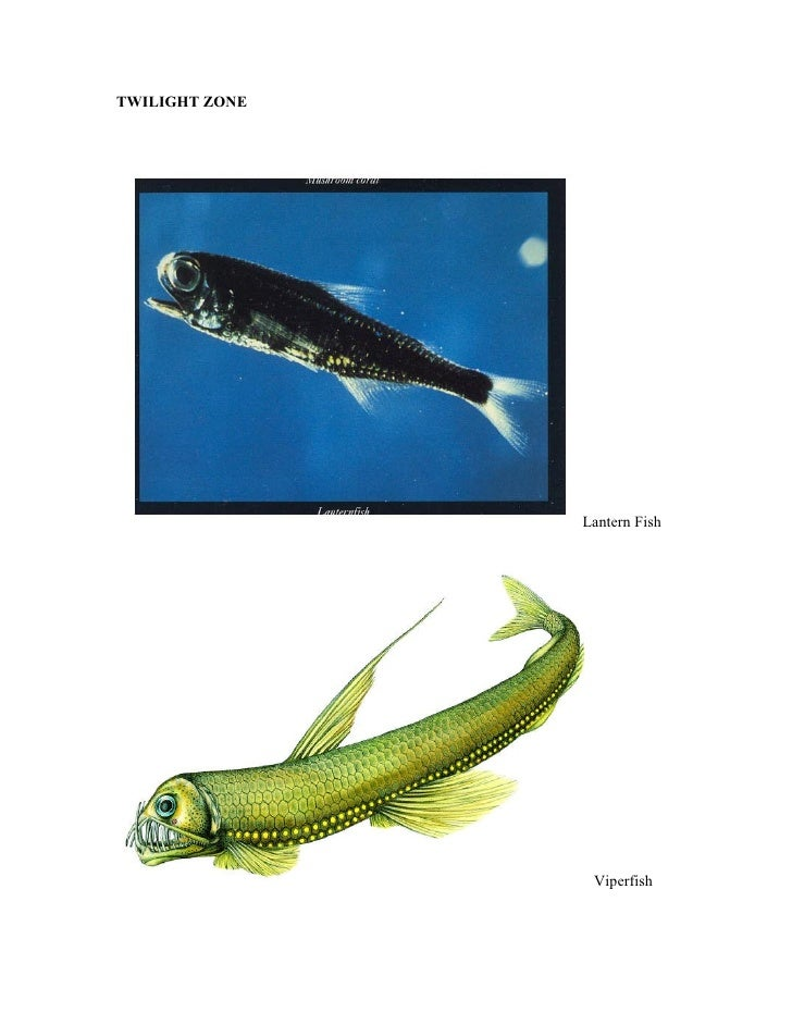 Twilight zone animals for Twilight zone fish
