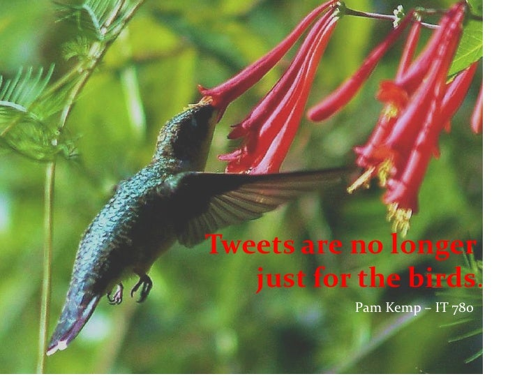 Tweets are no longer           just for the birds.<br />                                                  Pam Kemp – IT 7...