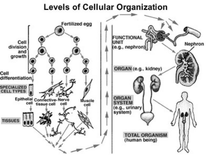 living things & cell theory