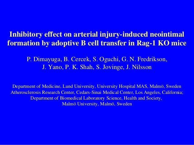 Inhibitory effect on arterial injury-induced neointimal formation by adoptive B cell transfer in Rag-1 KO mice P. Dimayuga...
