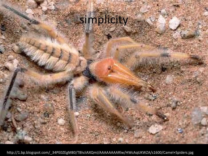 simplicityhttp://1.bp.blogspot.com/_34PE0ZEgM80/TBlvJiAXQmI/AAAAAAAARlw/HWcAqtJKWZA/s1600/Camel+Spiders.jpg