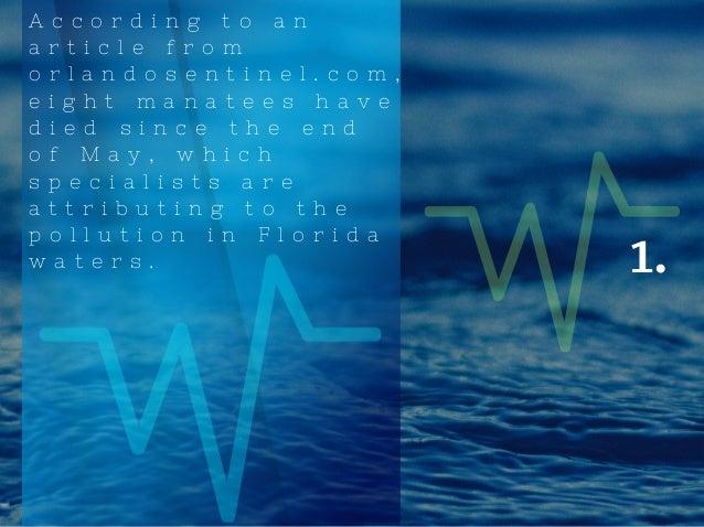 Tyler Sheff   The Algae In Florida Slide 2