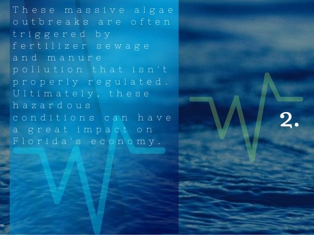 Tyler Sheff   The Algae In Florida Slide 3