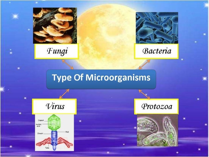 the 4 types of microbes 3 types of microbes activity 47 123 customer reviews author: created by  microbes summary sheet blank 3 main types display and posters ppt, 1.