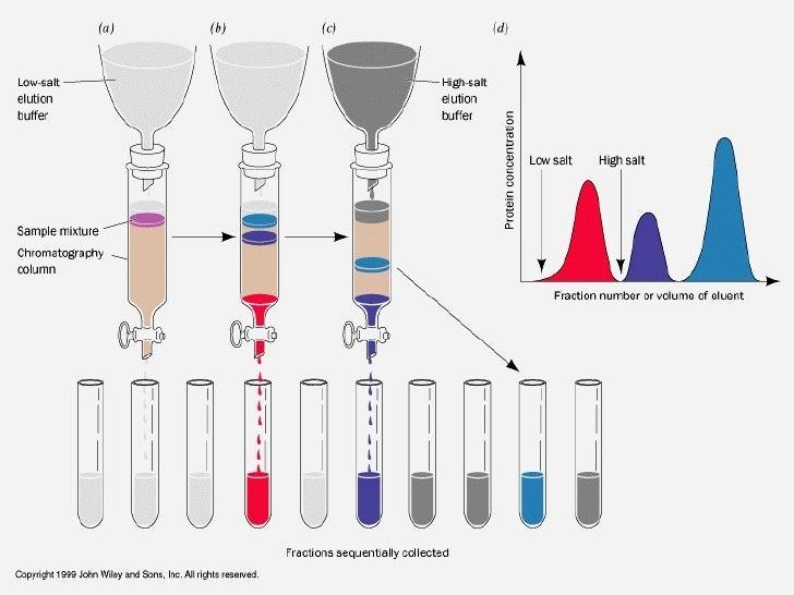 thin-layer chromatographic analysis of steroids