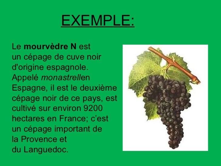 Le mourvèdre N est uncépagede cuve noir d'origineespagnole. Appelé monastrell en Espagne, il est le deuxième cépage ...
