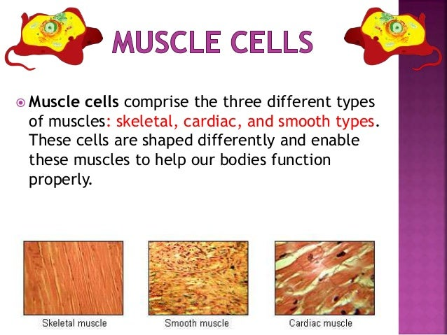 types of cells in the body class 8, Human Body