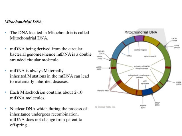 6. Mitochondrial DNA: ...