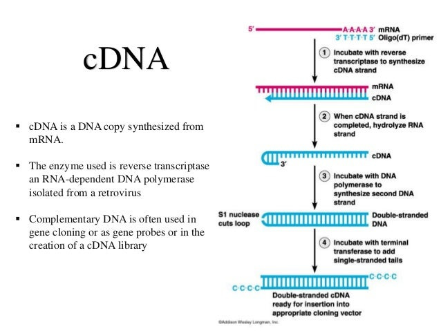 Types of DNA... Reverse Complement Dna